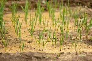 Ten Tips for Buying Seeds