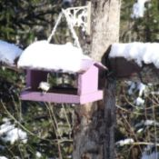 Snow covered bird feeder and bird.