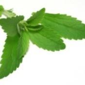 Growing: Stevia