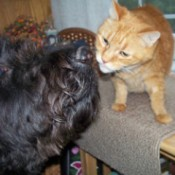 Dog and cat nose to nose.