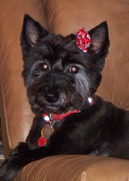Abby wotj red collar and hair bow.