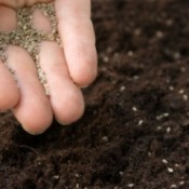 Planting Small Seeds