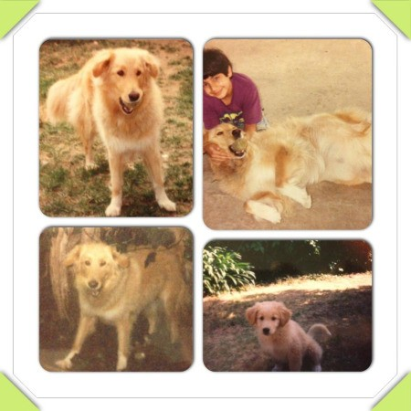 Four part photo of dog.