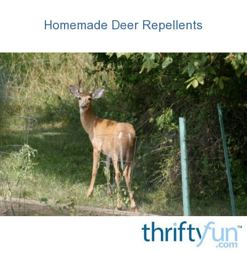 Homemade deer rabbit repellent recipe homemade ftempo for Ajuba indian cuisine ashland va