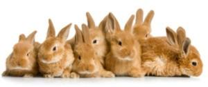Rabbits, Rabbits and More Rabbits!