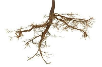 plant root