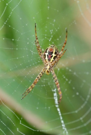 Spiders in the garden.