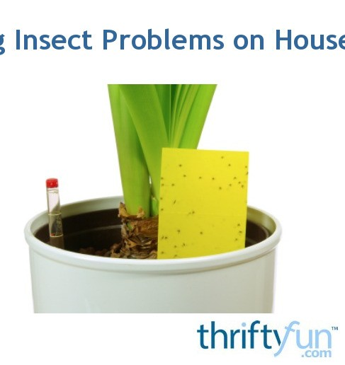 Solutions for Insect Pests on Houseplants   ThriftyFun on