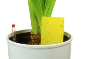 Insect Problems on Houseplants