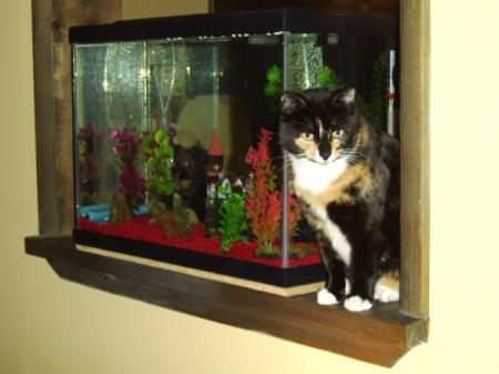 Cat sitting next to aquarium.