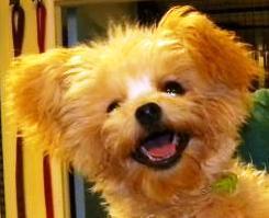 Closeup of Baxter's face.