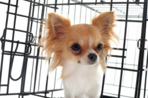 A small dog in a kennel.