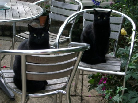 Black cats on patio chairs.