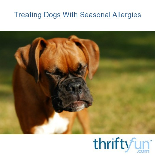 Treating Dogs With Seasonal Allergies | ThriftyFun