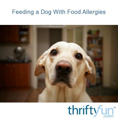 Feeding a Dog With Food Allergies | ThriftyFun