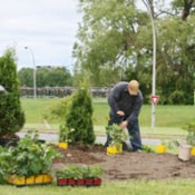 Frugal Landscaping Tips
