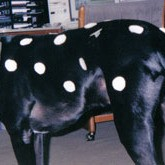 dog with paper spots
