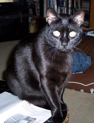 Blackie (Black Cat)