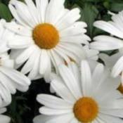 Perennials For Beginners