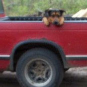 Bubba in the bed of a red truck.