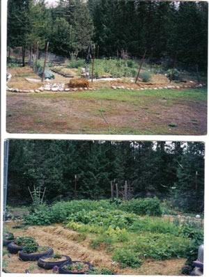 Views of garden with straw mulch.