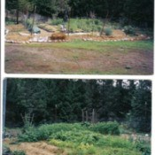 Views of garden with straw mulch.