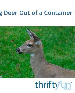 Keeping Deer Out Of A Container Garden Thriftyfun