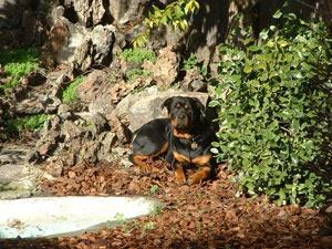 Dog lying outside.