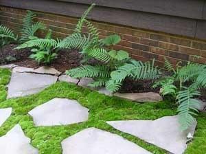 moss around stone path