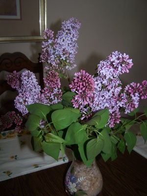 Spring Lilacs in the Ozarks