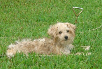 A dog laying outside in the grass.
