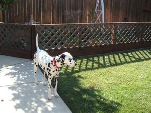Dottie in the yard.