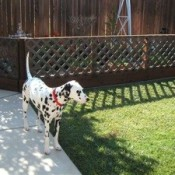 Dottie in the yard.