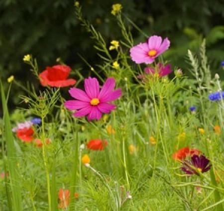 Cultivating a Natural Garden
