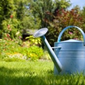 A Watering Can in Partial Shade