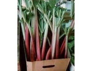 Rhubarb plants in cardboard box