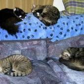 Four cats sleeping