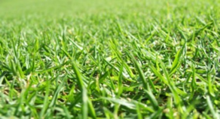 Homemade Lawn Fertilizer