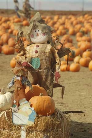 Pumpkins in background with a scarecrow in foreground.