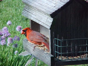 Fill Your Bird Feeders