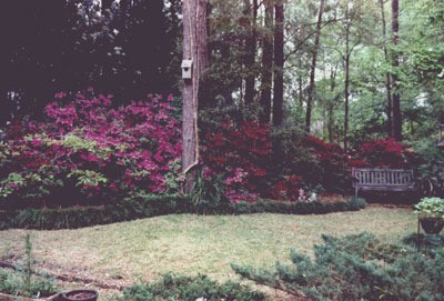 Bench and Perennial Border in Early Spring