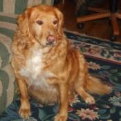 Dog on flowered carpet.