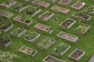 square foot box gardening
