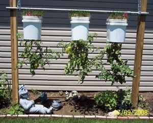 Upside Down Tomato Buckets