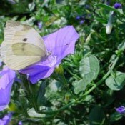 White butterfly on blur flower.