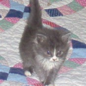Bootsie (Kitten)