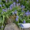 Using Broken Bowls in the Garden