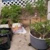 Raised Veggie Garden - lined boxes and washing machine tub planters