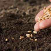 How Long Are Seeds Good For?
