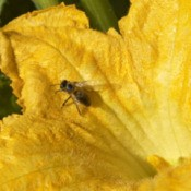 insect on yellow flower